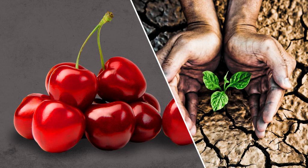 Global Cherry Summit y Agricultural Water Summit se postergan hasta 2022