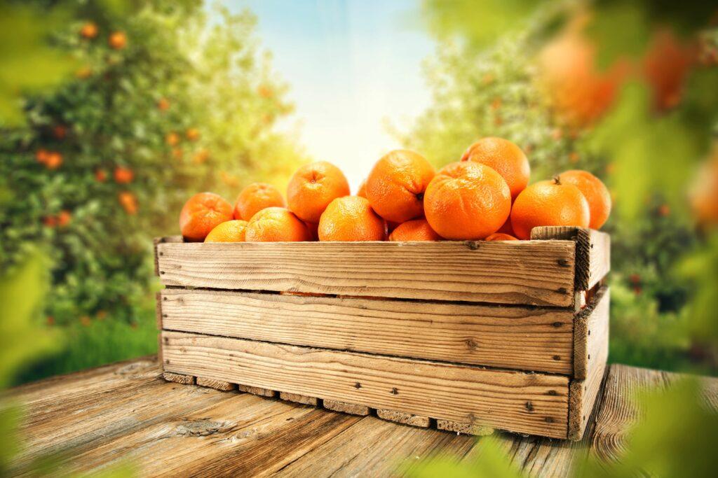 España realiza un envío experimental de 246 toneladas de naranjas en frío a India