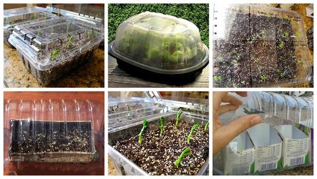 Reutiliza envases de plástico para hacer mini-invernaderos