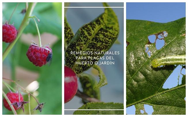 Remedios naturales para plagas del huerto