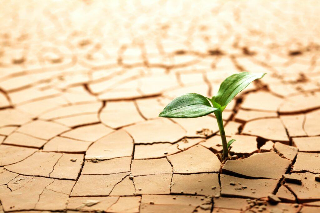 México impulsa proyecto de estimulación de lluvias para mitigar los efectos de la sequía