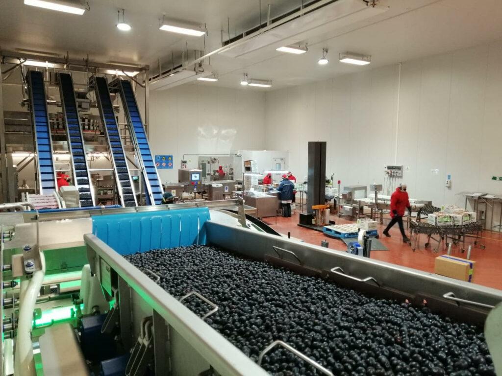 Vitafoods el nuevo actor en los mercados internacionales IQF confía en SORTEX para clasificar su fruta