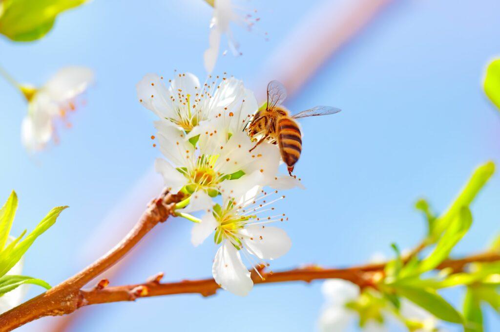 Beeflow entrena abejas con tecnología Conicet para mejorar la polinización de cultivos