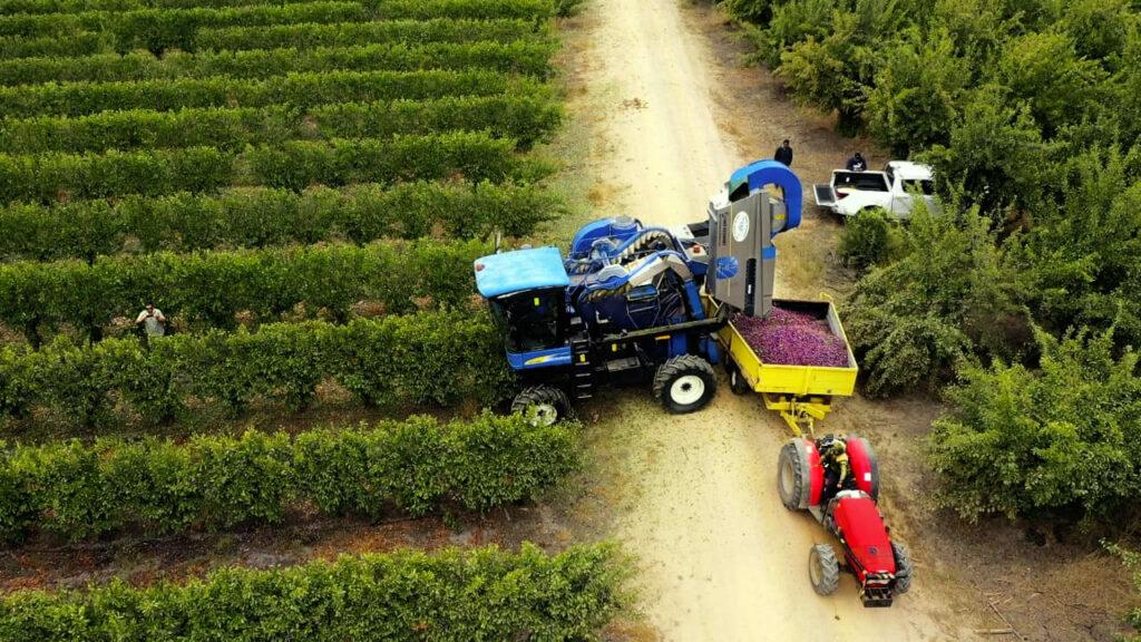 Chile celebra la primera plantación de Ciruelos D'Agen en alta densidad para una mecanización total