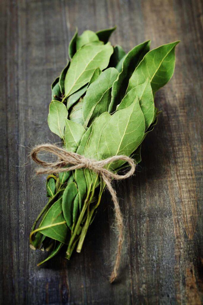 planta de laurel