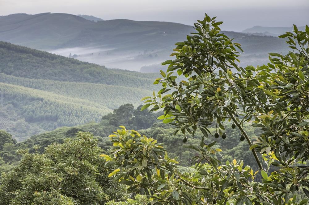 Westfalia Fruit logra certificación Carbon Measured para productos vendidos en mercado Sudafricano y aguacates vendidos en Reino Unido