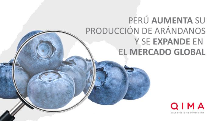 Perú aumenta su producción de arándanos y se expande en el mercado global
