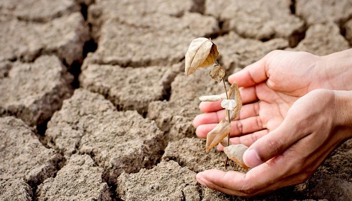 Chile: Decretan emergencia agrícola por déficit hídrico en regiones frutícolas claves