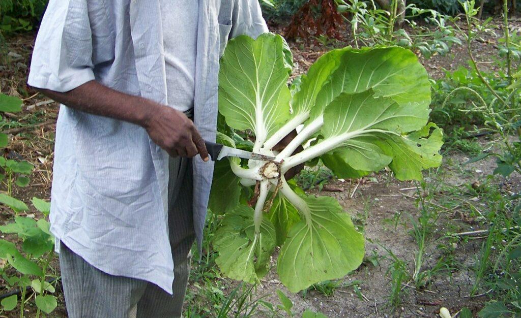 5 vegetales que puedes cultivar en dos meses o menos