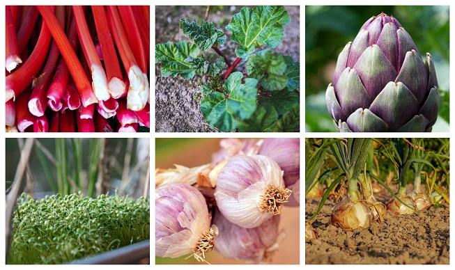 17 plantas perennes que puedes cultivar y que producen durante años