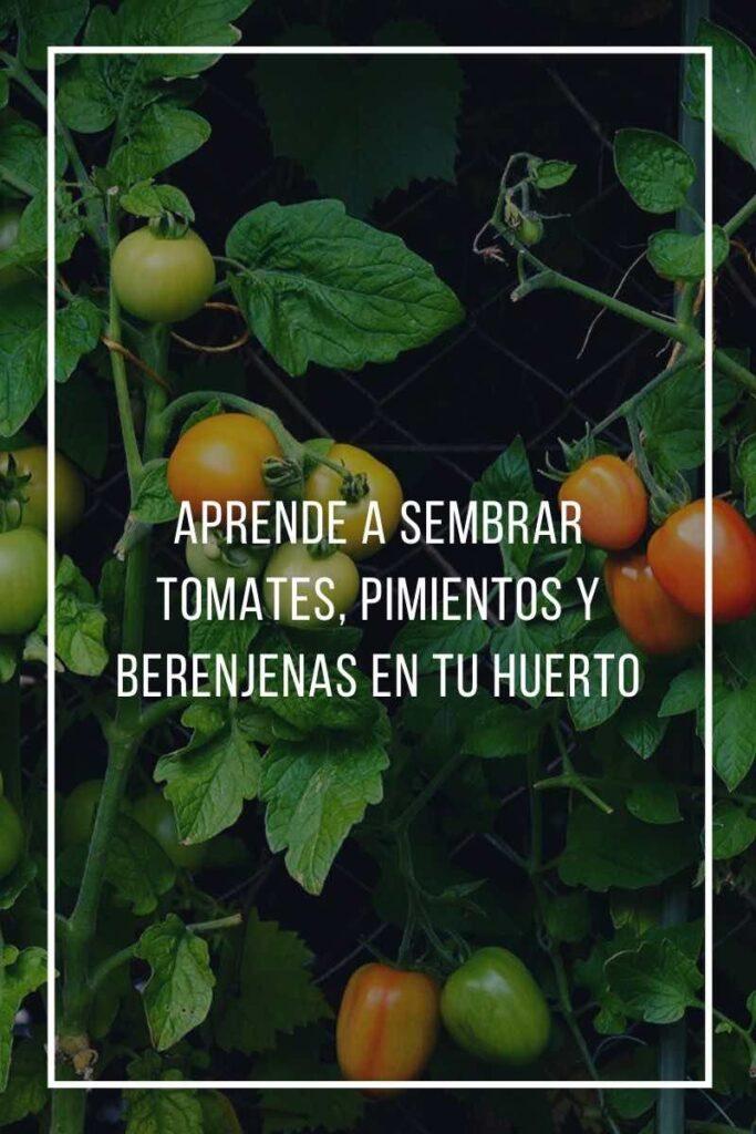 tomates pimientos y berenjenas