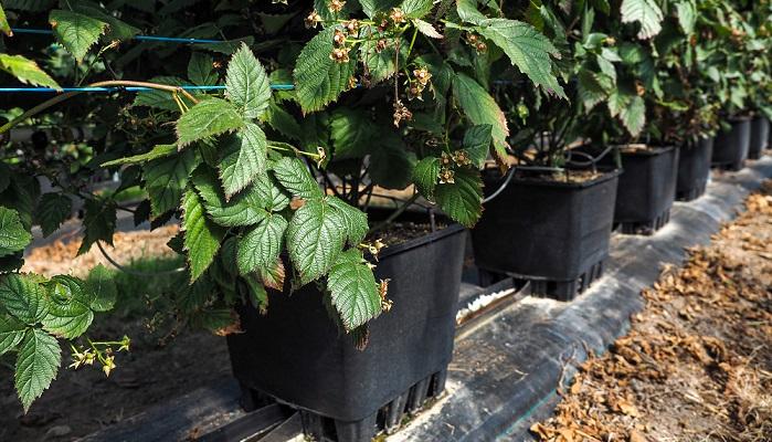 Galuku prepara a la industria para el futuro con sistemas de cultivo hidropónico pioneros