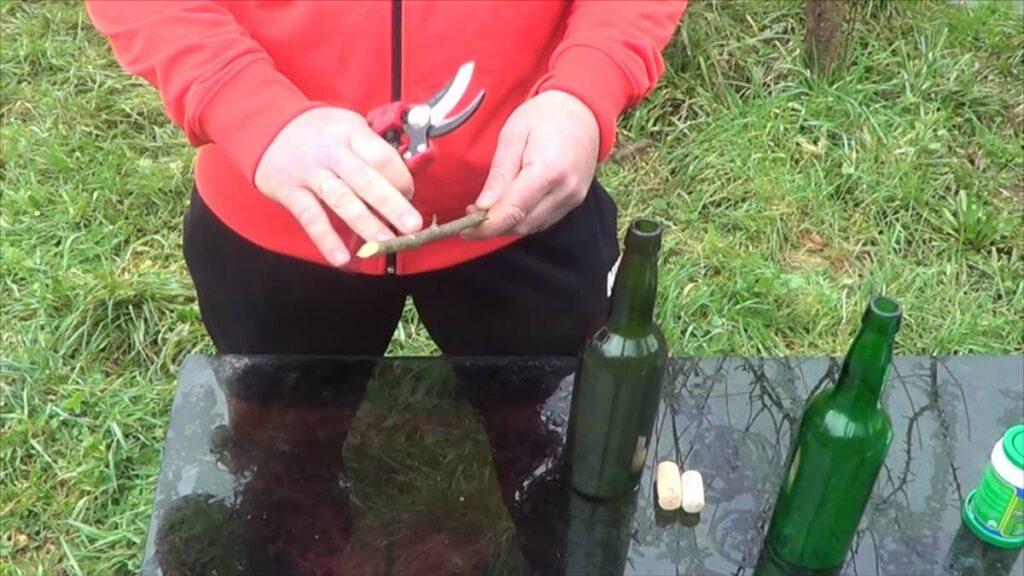 Cómo cortar y conservar una rama para injertar