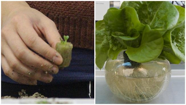 Guía para fabricar el sistema de cultivo hidropónico más sencillo