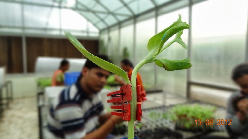 Cómo realizar injertos de hortalizas de manera efectiva