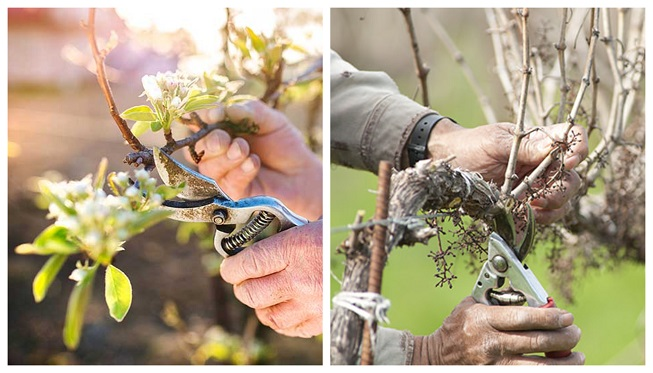 Cómo podar árboles frutales mayores y menores