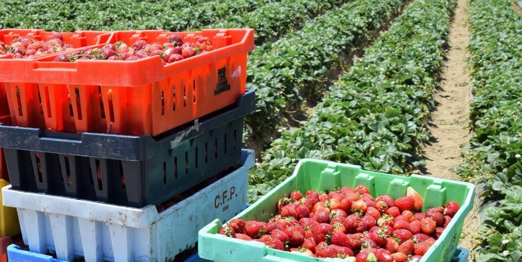 Las importaciones de productos mexicanos cuestan miles de millones a Florida, según el Departamento de Agricultura de EE.UU.