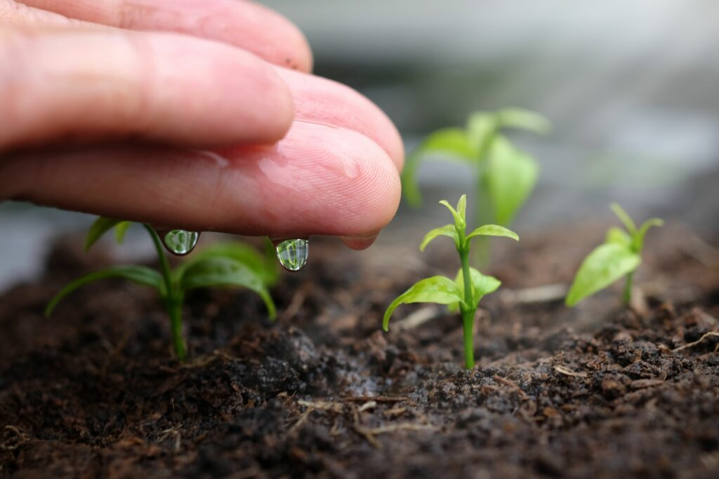 41° Congreso Argentino de Horticultura 2021