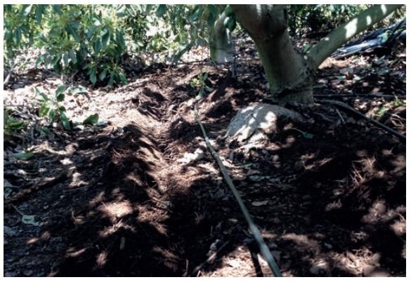 uso de goteros enterrados en huerto de paltos