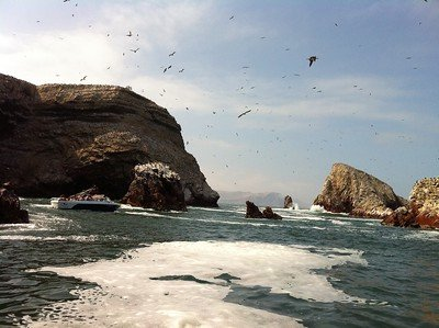 Visit the Ballestas Islands