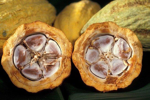 Cacao | Peru | Peru tours