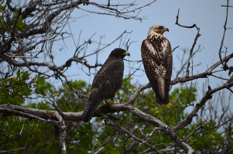 Galapagos Islands 5 Day Luxury Cruise Itinerary Central And Northern Route