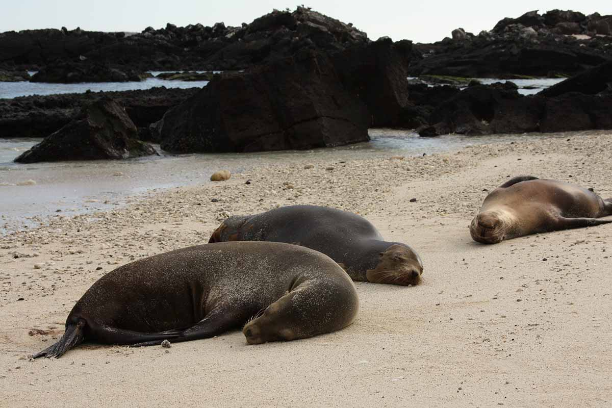 Galapagos In Style 8 Day Infinity Yacht Adventure | Infinity | Galapagos islands