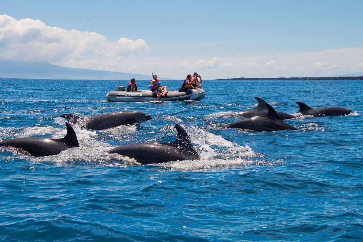 Dolphins | Galapagos | Galapagos Islands