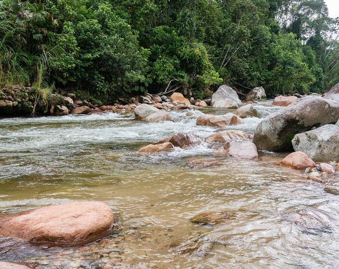 Deep Rainforest River | Ecuador