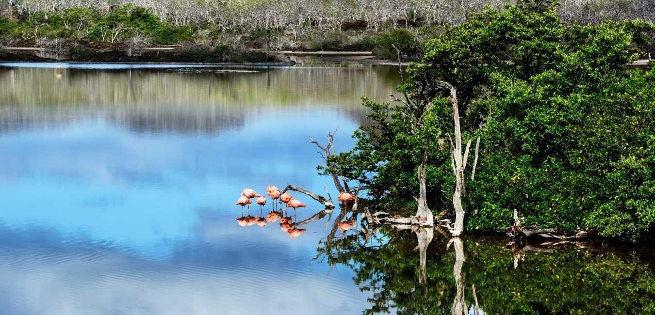 West Galapagos Islands | Galapagos tours