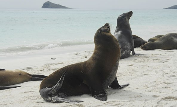 Fur Seals & Sea Lions | Galapagos islands | South America Travel
