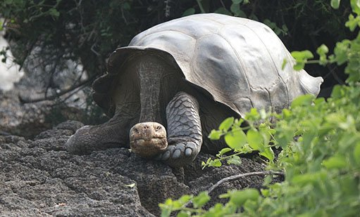 Galapagos Conservation | Galapagos islands | South America Travel