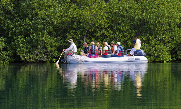 Mangroves | Galapagos islands | South America Travel