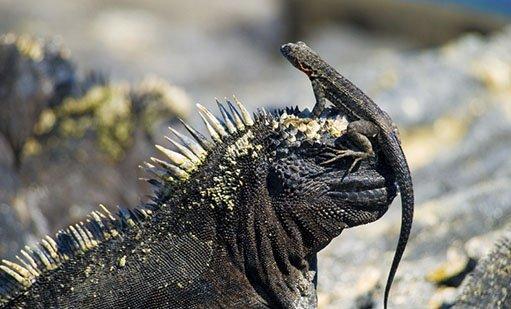 Galapagos Reptiles | Galapagos islands | South America Travel