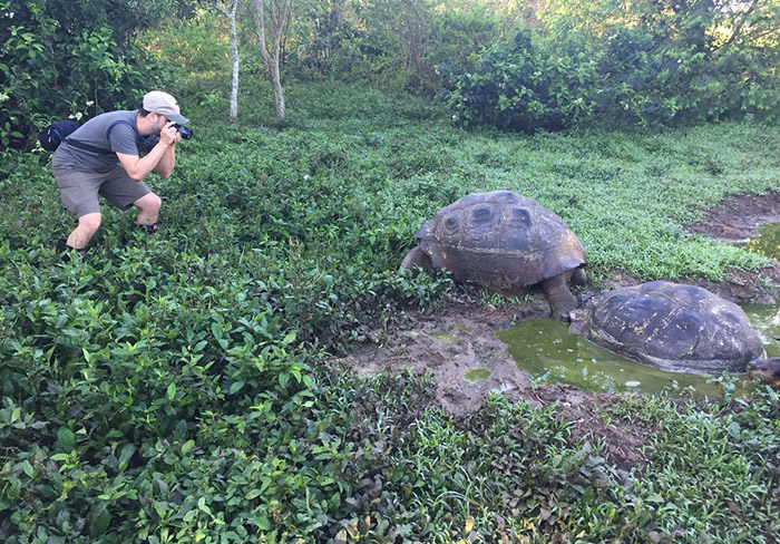 Galapagos giant tortoise San Cristobal island