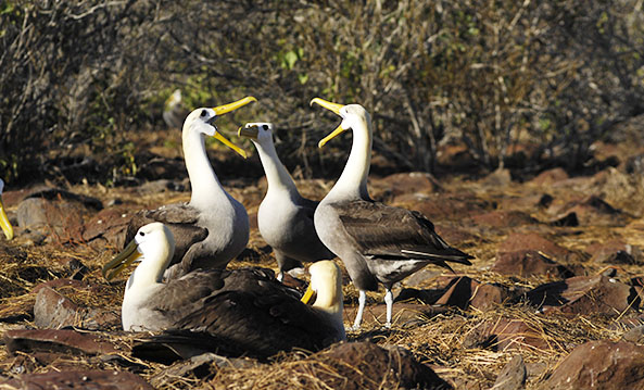 Wildlife Activity Calendar | Galapagos islands | South America Travel
