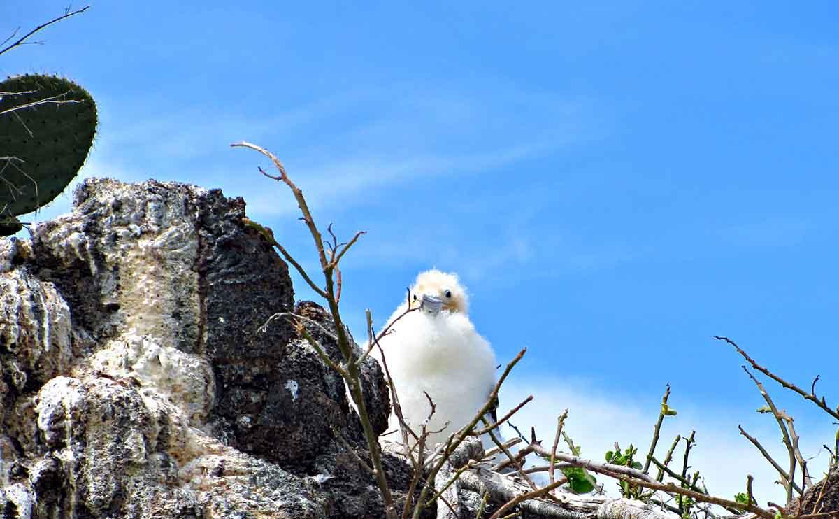 Itinerary A | Alya | Galapagos islands