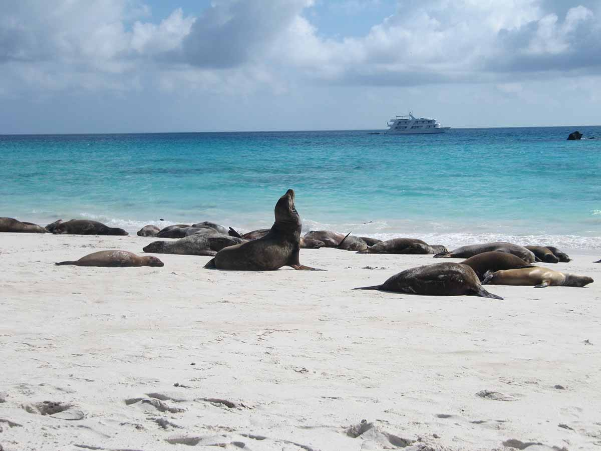8 Days A Itinerary Petrel Catamaran Trip In Galapagos