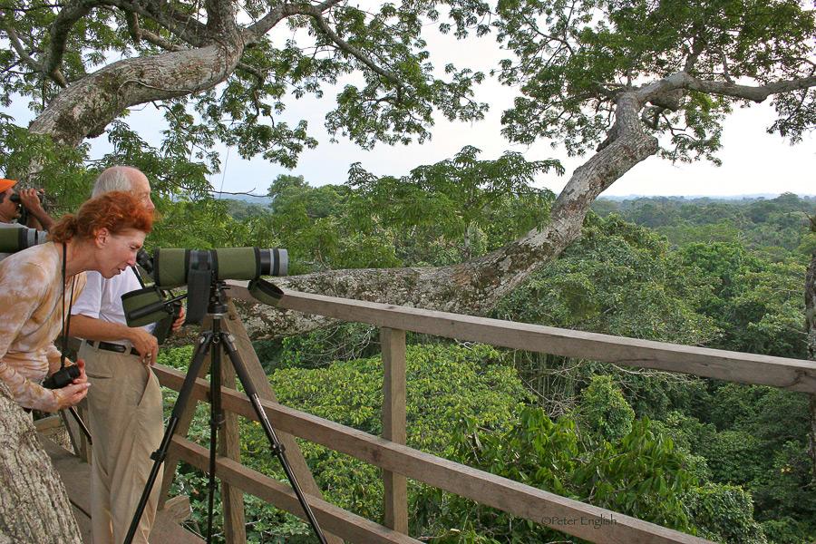 Amazon Bird-watching Experience | Ecuador