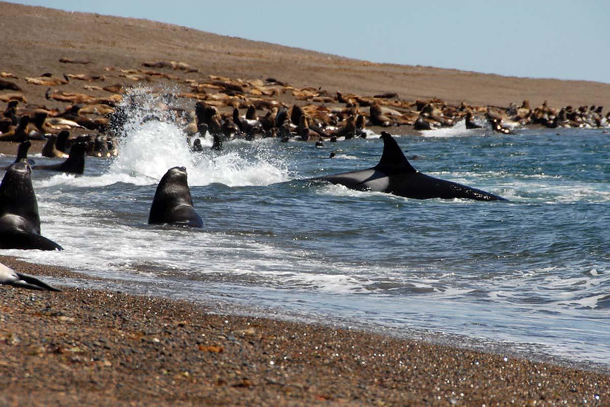 Patagonia whale tour | Patagonia tours