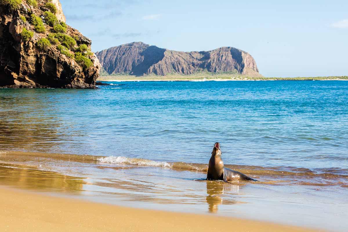 Amazing Nine Days East Central Islands Boat Journey | La Pinta | Galapagos islands