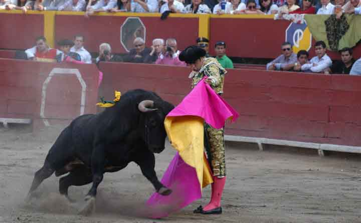 Watch a Bullfight at the Plaza de Acho | Peru