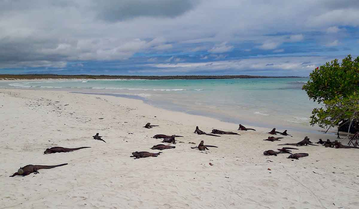 Galapagos In Style Southern Islands Cruise | Infinity | Galapagos islands