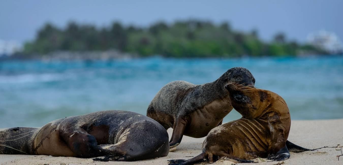South Galapagos Islands | Galapagos tours