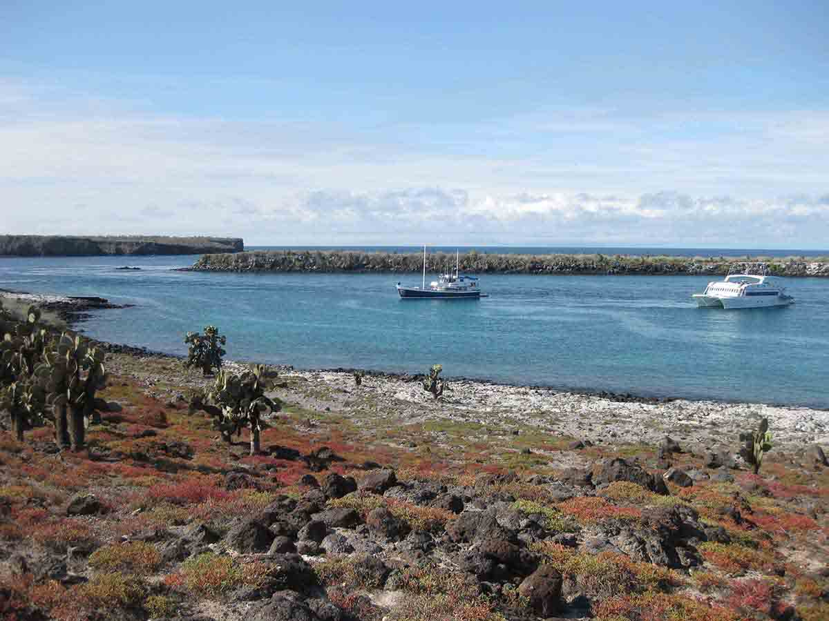 South Plazas Island | Galapagos | Galapagos Islands