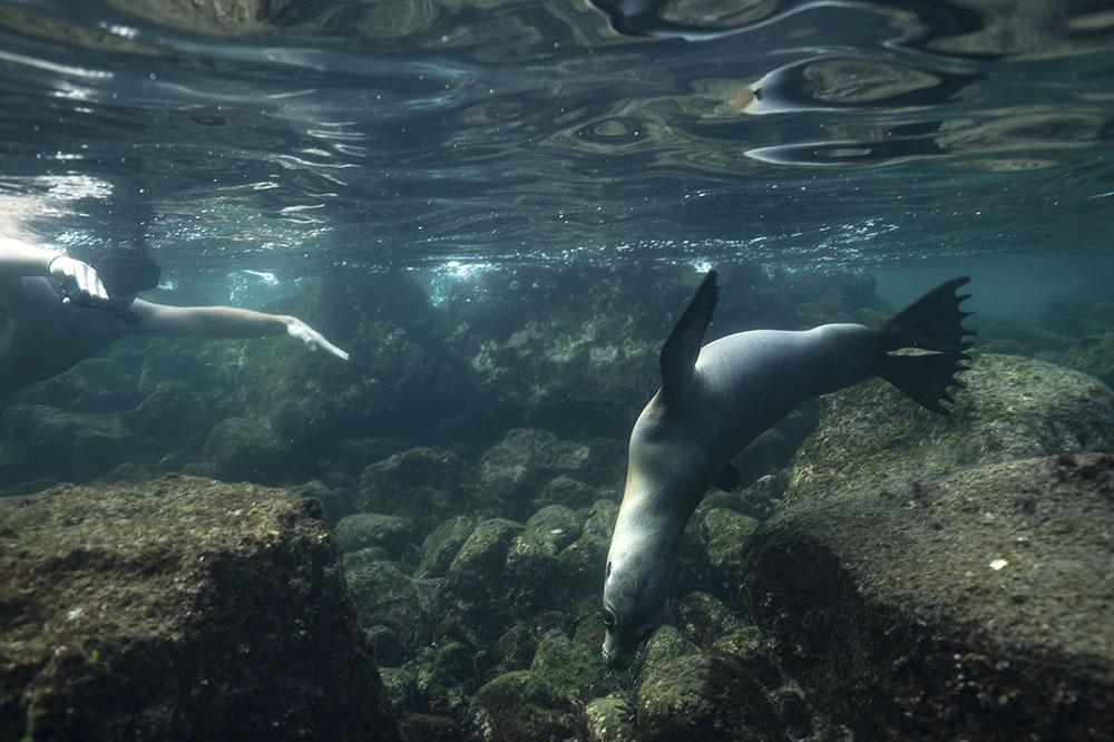 Galapagos sea lion | Peru tours