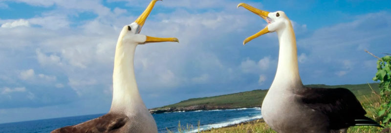 Funny animal dances in the Galapagos Islands