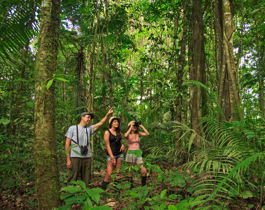 Amazon Bird-watching   Ecuador