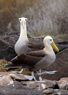April | Galapagos Islands