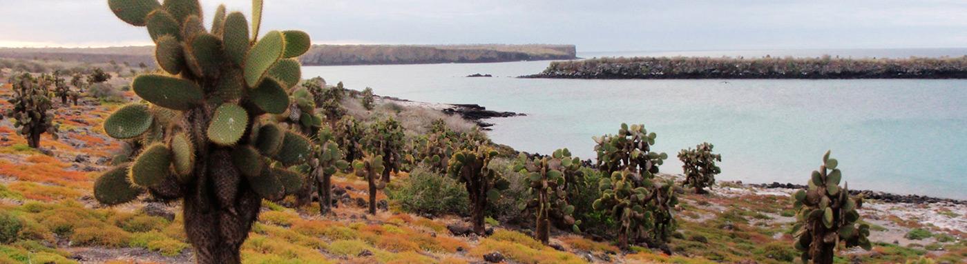 Galapagos Cacti | Galapagos islands | Galapagos cruises